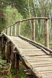 Лес моста весной Стоковая Фотография