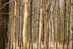 Лес национального парка Pench, лиственный и сухой стоковые фото