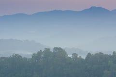 Лес на варенье понедельника Стоковая Фотография