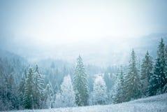 Лес на горе Стоковое Изображение RF