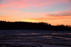 Лес на зиме вокруг времени захода солнца стоковые изображения