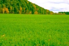 Лес на краю зеленого поля Стоковые Фотографии RF