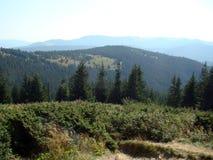 Лес на наклонах горы Стоковая Фотография