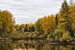 Лес на озере Стоковое Фото