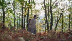 Лес на осени dhay видеоматериал