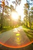 Лес на прибалтийском побережье в Польше Стоковые Изображения RF
