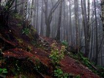 Лес на пути к Ajusco, Мексике Стоковые Фотографии RF