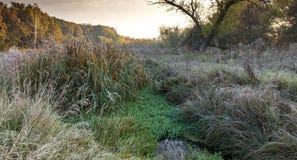 Лес на утре Стоковые Фотографии RF