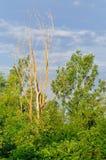 Лес на утре стоковое изображение