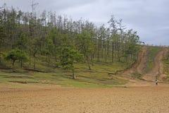 Лес на холме Стоковое Фото