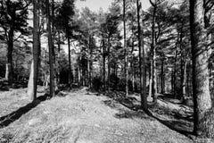 Лес на Dartmoor, около Tavistock, Девон Стоковая Фотография RF