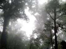 Лес на Doi-Inthanon Стоковая Фотография