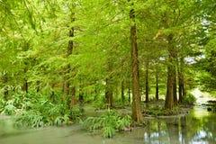 Лес на Hualien Стоковое Изображение RF
