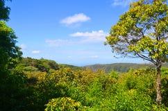 Лес на Monteverde, Puntarenas Коста-Рика стоковые изображения rf