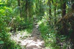 Лес на saraburee стоковая фотография rf