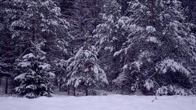 Лес невероятно красивой зимы coniferous акции видеоматериалы
