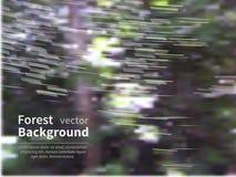 Лес нерезкости Стоковое Изображение RF