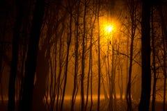 Лес ночи Стоковая Фотография RF