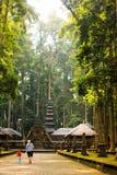 Лес обезьяны Sangeh в Бали, Индонезии стоковое изображение