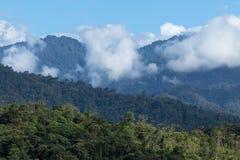 Лес облака эквадора стоковая фотография rf