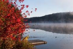 Лес озера осенью, Канада стоковые фото