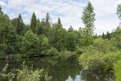 Лес озера Стоковая Фотография