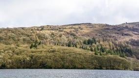 Лес озера Windermere Стоковые Фото