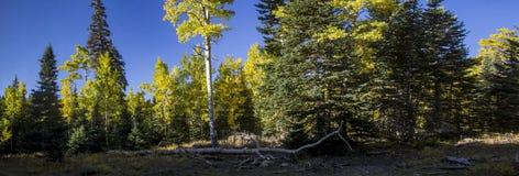 Лес около головы Брайан, Юты Стоковое фото RF