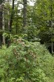 Лес около d'Alsace баллона Стоковая Фотография RF