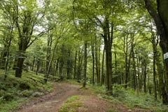 Лес около d'Alsace баллона Стоковая Фотография