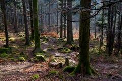 Лес около Nideckl в горах Вогезы во Франции стоковое изображение