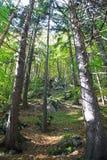 Лес около городка Ruzomberok стоковое изображение
