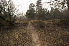 Лес осени без деревьев Стоковые Изображения RF