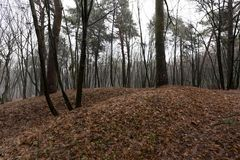 Лес осени без деревьев Стоковое Фото
