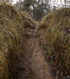Лес осени без деревьев Стоковое Изображение
