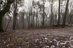 Лес осени без деревьев Стоковые Фото