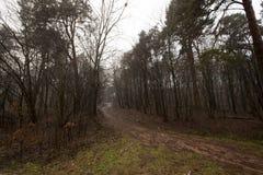 Лес осени без деревьев Стоковое фото RF