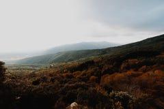 Лес осени Брауна в Каталонии стоковое изображение rf