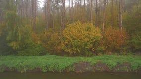 Лес осени, видео трутня воздушное видеоматериал
