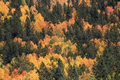 Лес осени вполне цветов стоковые изображения