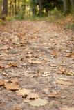 Лес осени в Австрии стоковое фото rf