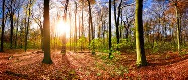Лес осени в свете восходящего солнца Стоковые Изображения RF