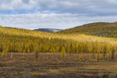 Лес осени в солнечном дне в России стоковая фотография