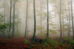 Лес осени в тумане Стоковая Фотография RF