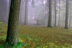 Лес осени в тумане Стоковые Фотографии RF