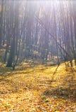Лес осени в хорошую погоду Стоковая Фотография RF