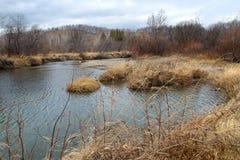 Лес осени и небольшое река Kizil в курорте Abzakovo, России стоковое фото rf