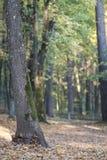 Лес осени и солнечный луч стоковая фотография