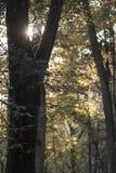 Лес осени и солнечный луч стоковые фото