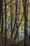 Лес осени и яркий красивый ландшафт, желтые листья стоковые фотографии rf